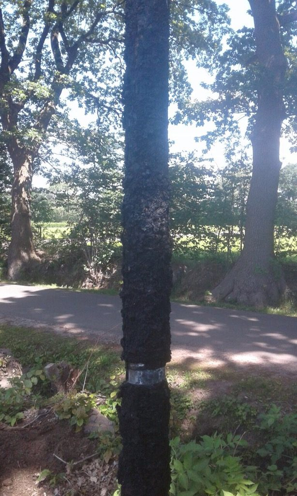 Rellingen: Baumschulbetrieb, Brunnenüberprüfung…